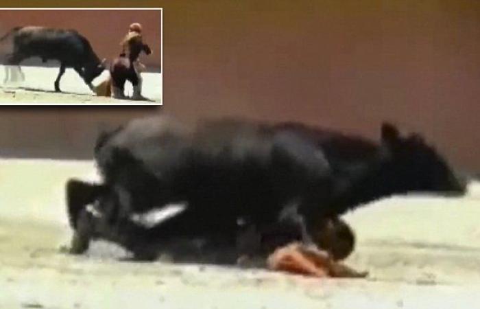 bull mounts on female fighter