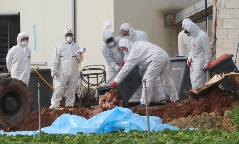 Highly pathogenic bird flu outbreak detected in South Korea