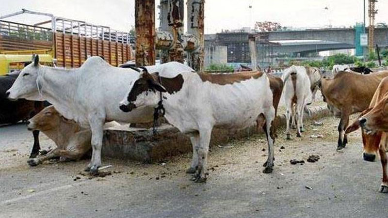 Centre to respond on cattle sale notification in two days