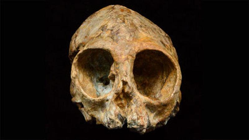 Skull Alesi