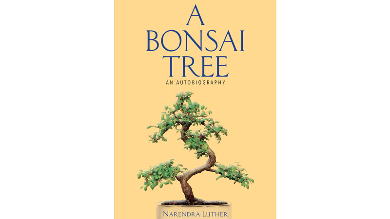A Bonsai Tree Book Review: A journey from Lahore to Hyderabad
