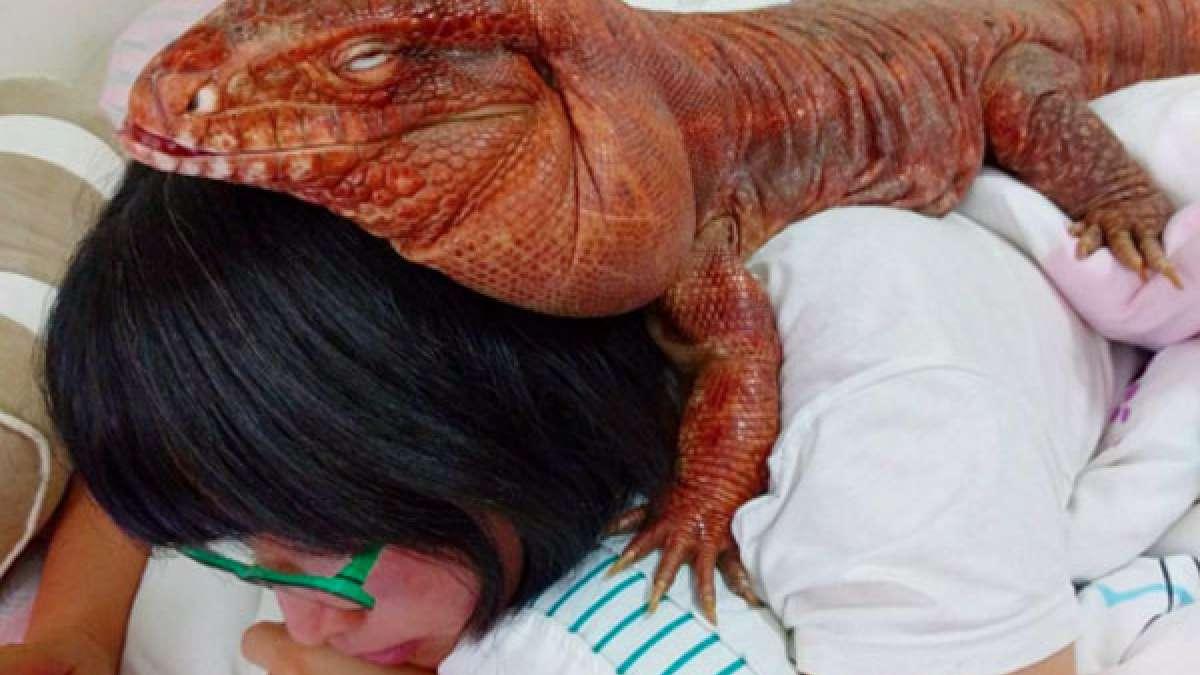 California woman with her pet giant lizard