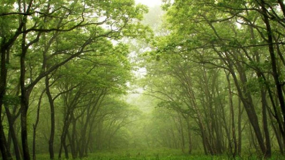 A staggering 2,305 sq km of forest cover in northeast India and the Andaman & Nicobar Islands -- slightly more than the size of Mauritius -- could disappear by 2025, a simulation study by ISRO scientists has predicted.