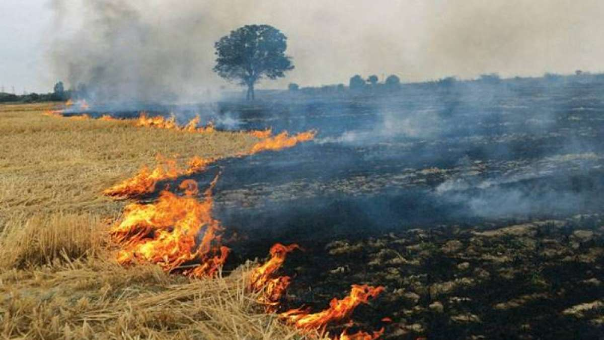 Delhi Smog: Here's what govt planning to curb stubble burning