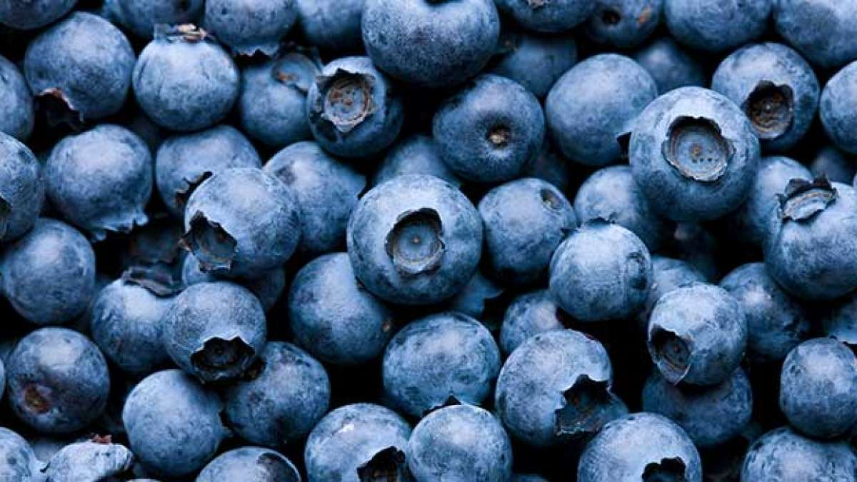 Suffering from cervical cancer? start eating blueberries for treatment: Study