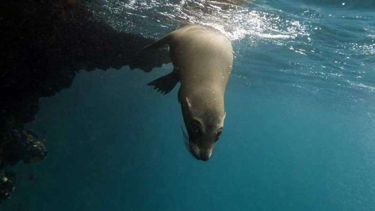 Marine Skin to make marine life monitoring easier: Scientist