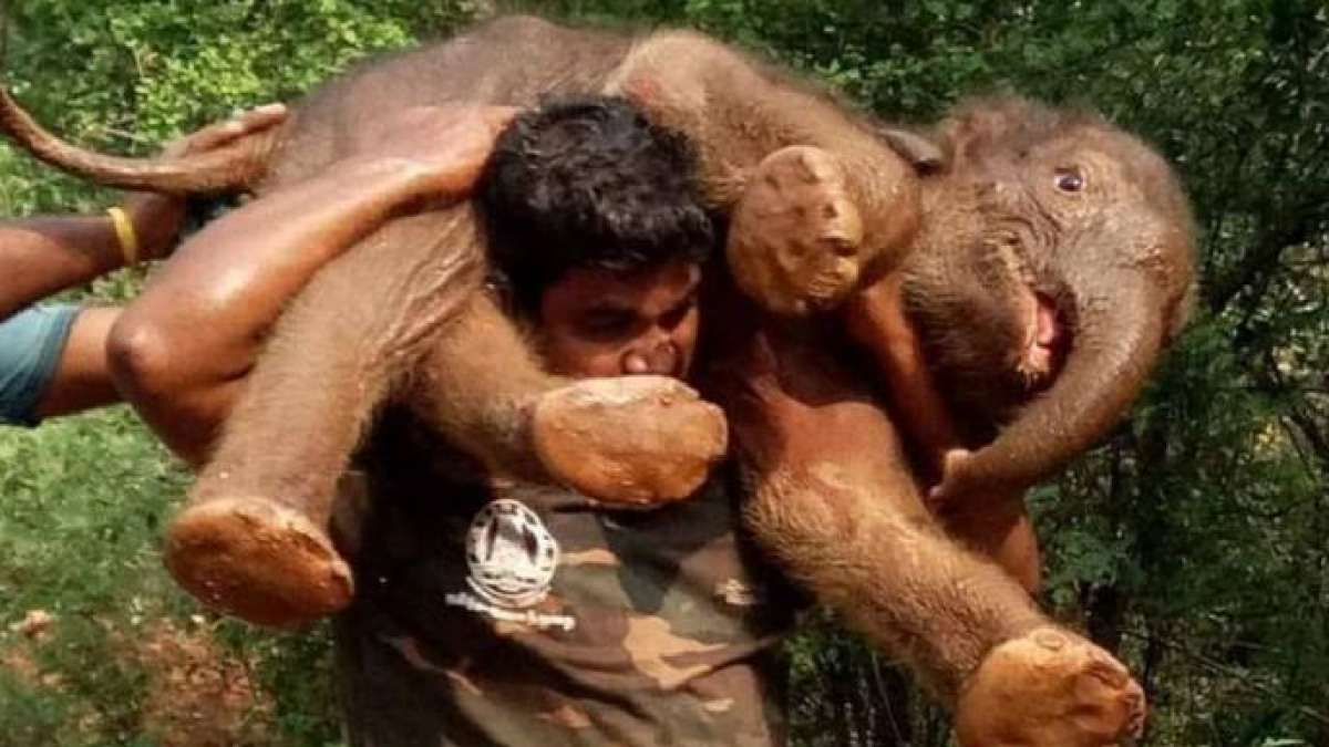 Viral: Kerala man saving baby elephant from flood, what's the actual story?