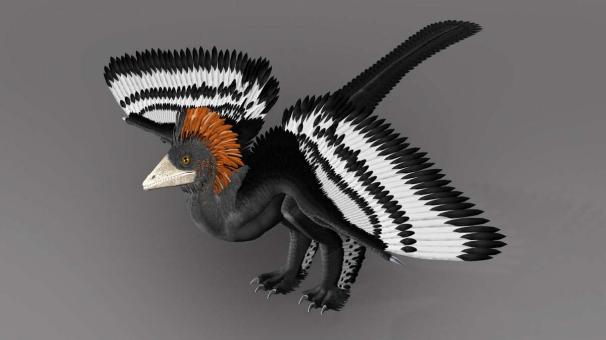 Anchiornis, one of the earliest feathered dinosaurs (Representational image)