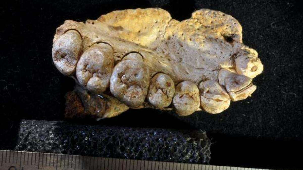 Earliest human fossil discovered