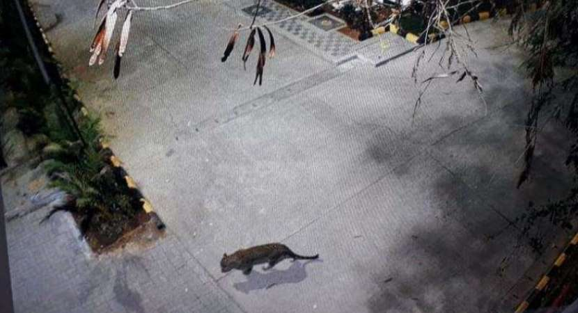 Mumbai: Leopard spotted at Thane Mall, search operation on