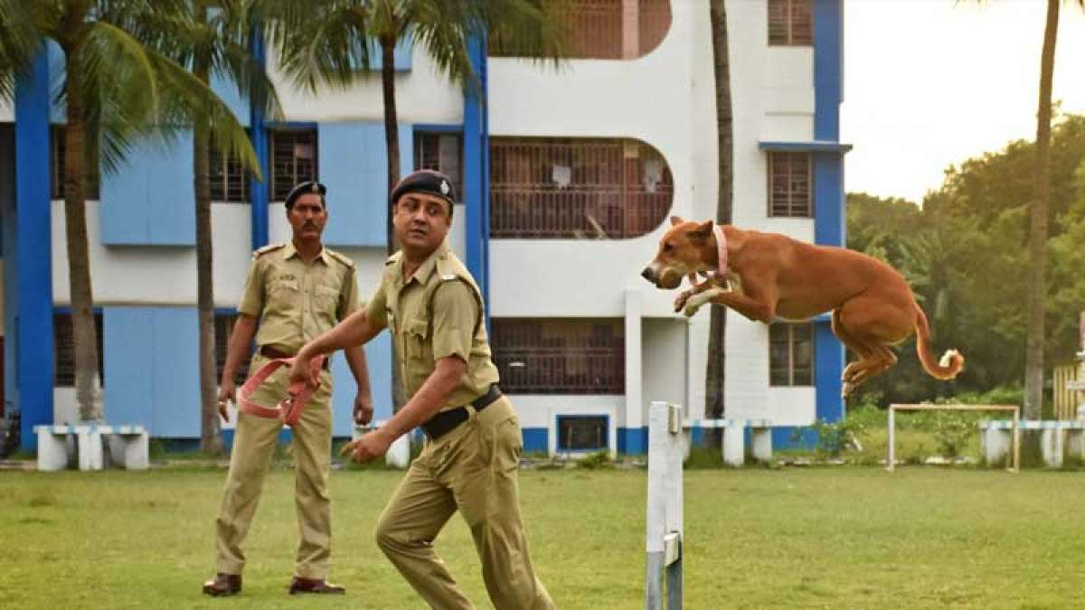 Rescued street puppy dog now joins West Bengal Police squad