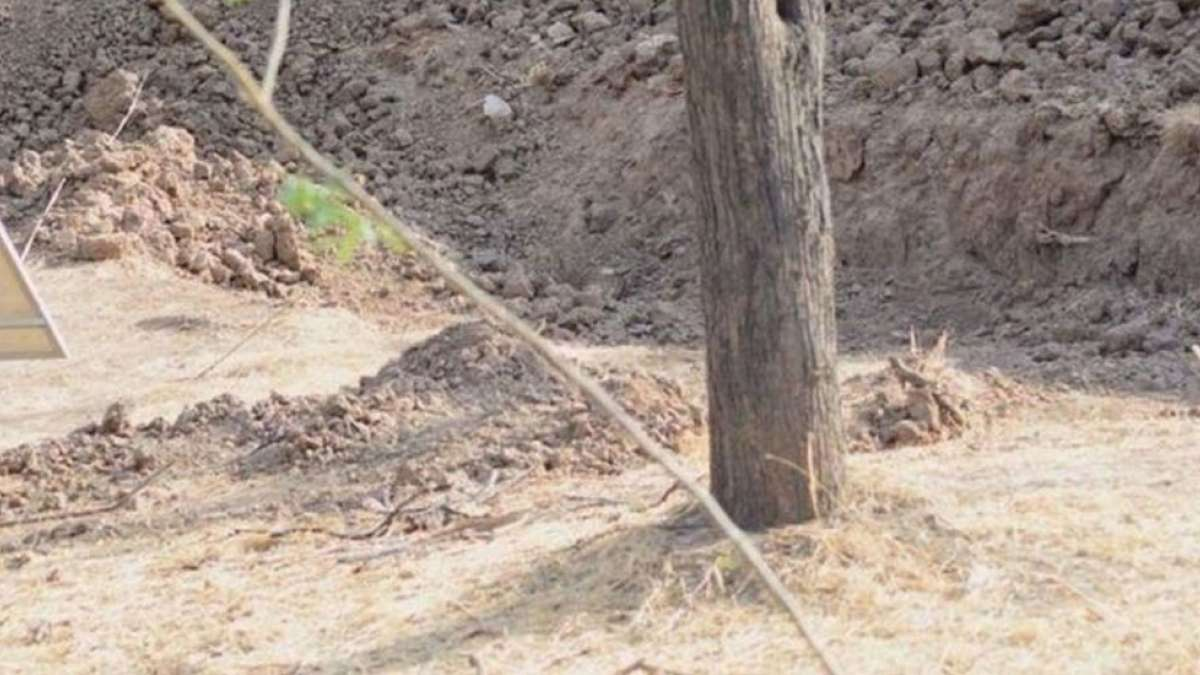 Spot the leopard picture is next viral thing on the internet. Give it a try