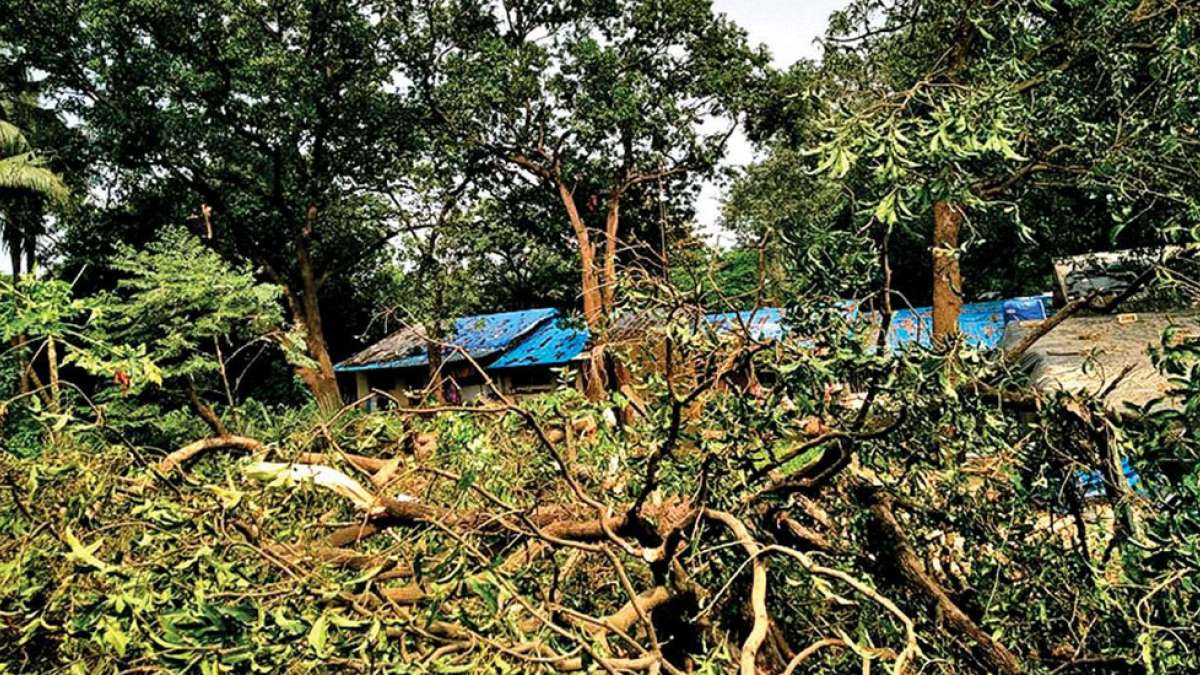 Mumbai: Tree cutting in Aarey colony ignites protests
